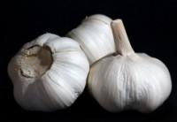 Sázení a pěstování česneku
