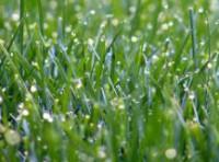 Anglický trávník před vaším domem