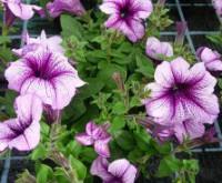 Zahradní kalendář - květen