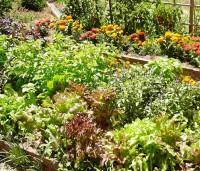 Rostliny, které se spolu nemusí