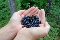 Léčivé lesní ovoce