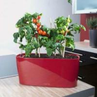 Zelenina do domu