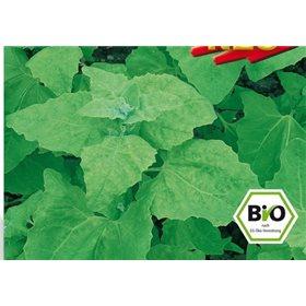 https://www.semena-rostliny.cz/10652-thickbox/melde-lebeda-zahradni-rostlina-atriplex-hortensis-bio-semena-osivo.jpg