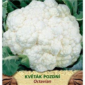 https://www.semena-rostliny.cz/23420-thickbox/kva-t-k-p-octavian.jpg