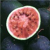 Meloun Small Shining - rudý (Citrullus lanatus ) cca 10 semen