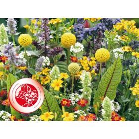 https://www.semena-rostliny.cz/27961-thickbox/vonave-kvety-pro-mlsouny.jpg